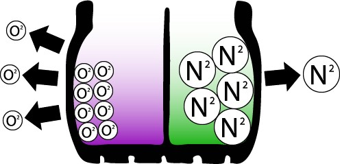 nitrogen diagram